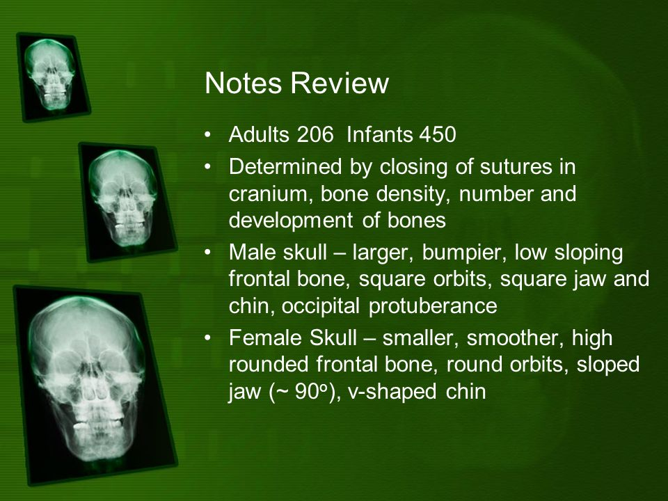 Notes Review Adults 206 Infants 450 Determined by closing of sutures in cranium, bone density, number and development of bones Male skull – larger, bumpier, low sloping frontal bone, square orbits, square jaw and chin, occipital protuberance Female Skull – smaller, smoother, high rounded frontal bone, round orbits, sloped jaw (~ 90 o ), v-shaped chin