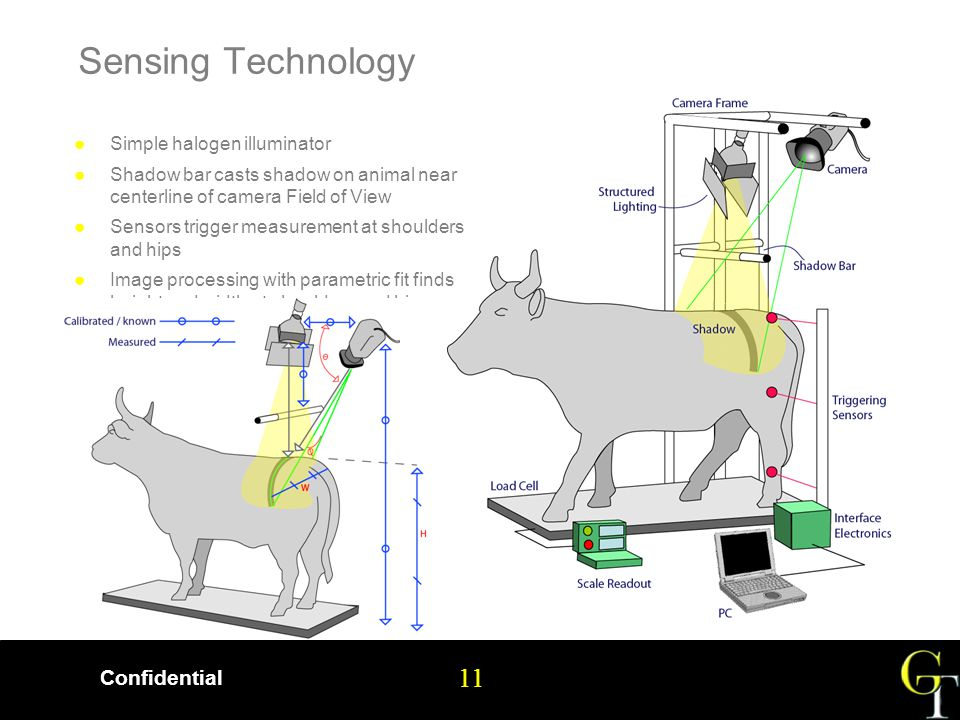 11 Confidential 11 Sensing Technology ●Simple halogen illuminator ●Shadow bar casts shadow on animal near centerline of camera Field of View ●Sensors trigger measurement at shoulders and hips ●Image processing with parametric fit finds height and width at shoulders and hips
