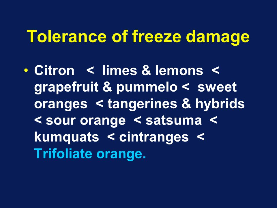 Tolerance of freeze damage Citron < limes & lemons < grapefruit & pummelo < sweet oranges < tangerines & hybrids < sour orange < satsuma < kumquats < cintranges < Trifoliate orange.