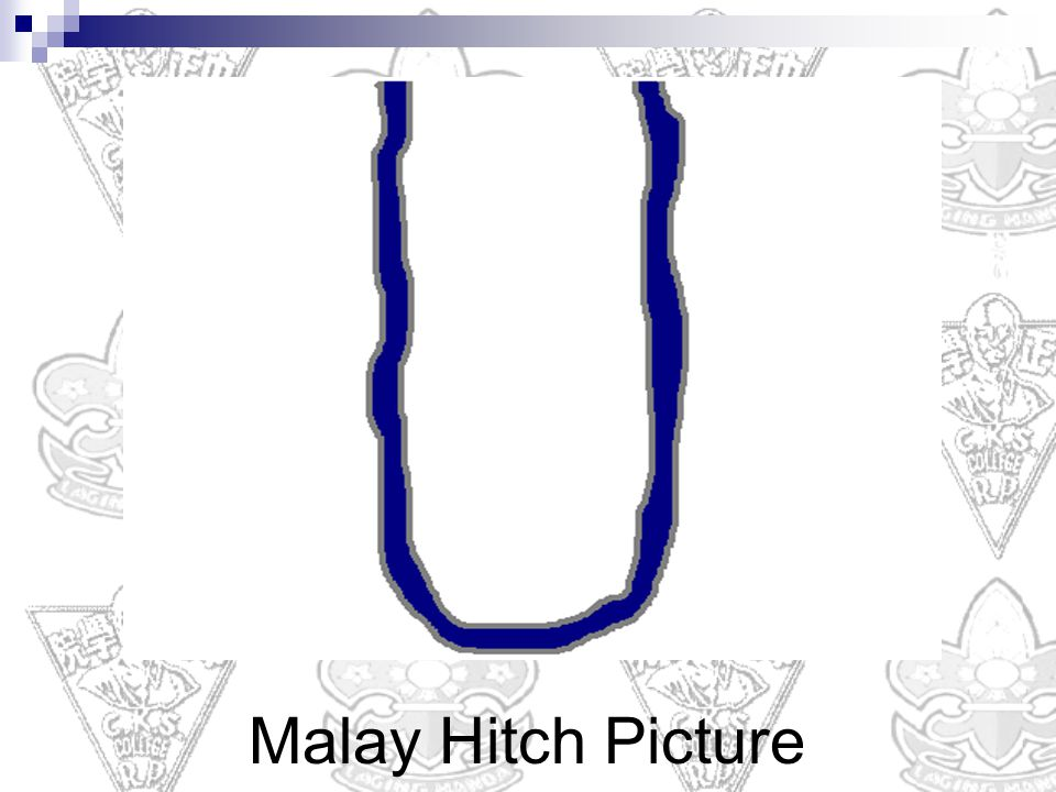 Malay Hitch Picture