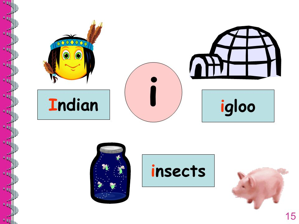 15 Indian igloo insects i