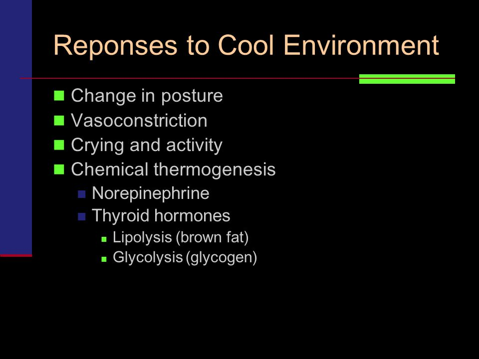 Reponses to Cool Environment Change in posture Vasoconstriction Crying and activity Chemical thermogenesis Norepinephrine Thyroid hormones Lipolysis (brown fat) Glycolysis (glycogen)