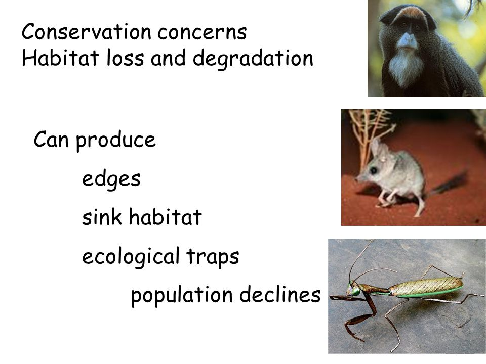 Conservation concerns Habitat loss and degradation Can produce edges sink habitat ecological traps population declines