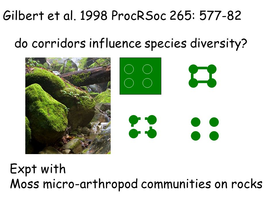 do corridors influence species diversity? Gilbert et al. 1998 ProcRSoc 265: 577-82 Expt with Moss micro-arthropod communities on rocks