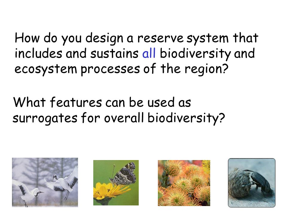 How do you design a reserve system that includes and sustains all biodiversity and ecosystem processes of the region? What features can be used as sur