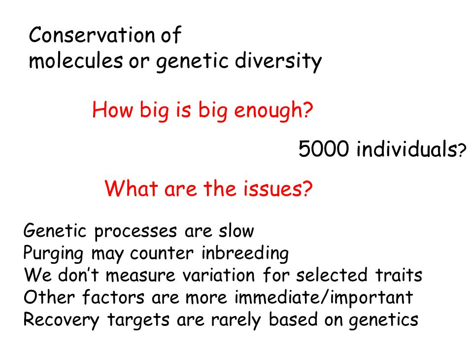 Conservation of molecules or genetic diversity How big is big enough? 5000 individuals ? What are the issues? Genetic processes are slow Purging may c