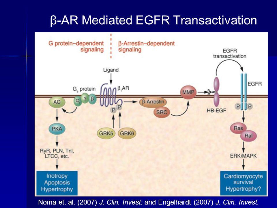 β-AR Mediated EGFR Transactivation Noma et. al. (2007) J. Clin. Invest. and Engelhardt (2007) J. Clin. Invest.