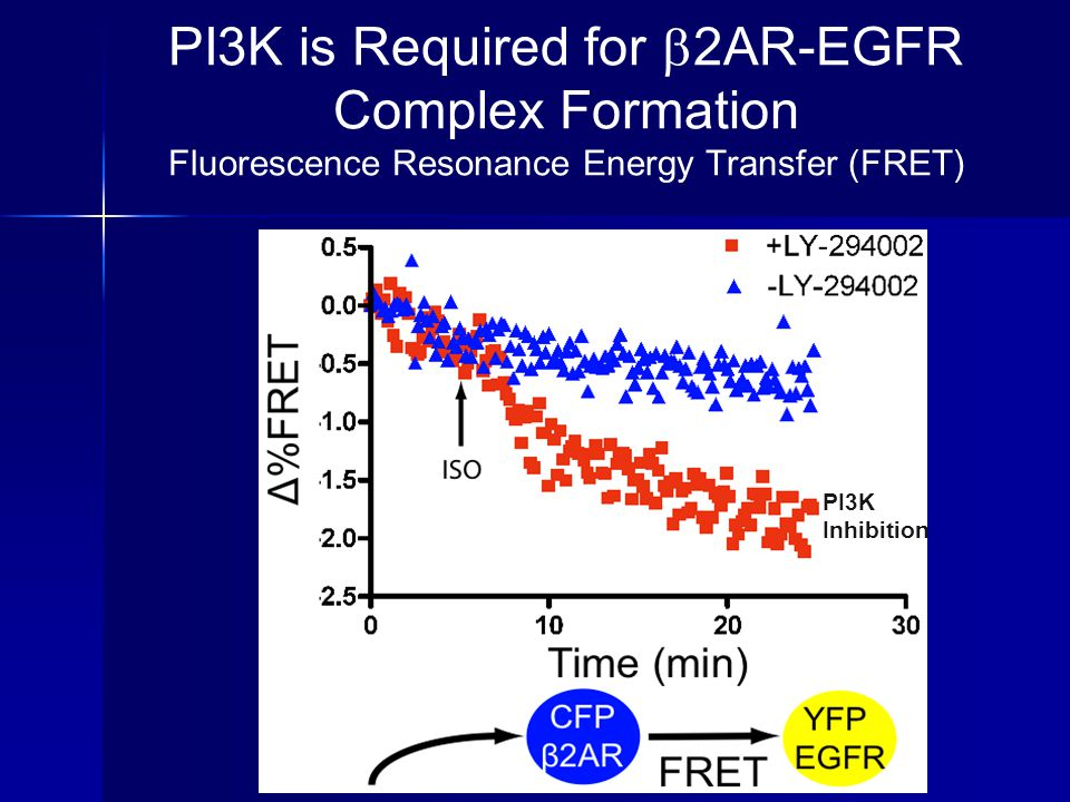 PI3K is Required for  2AR-EGFR Complex Formation Fluorescence Resonance Energy Transfer (FRET) PI3K Inhibition