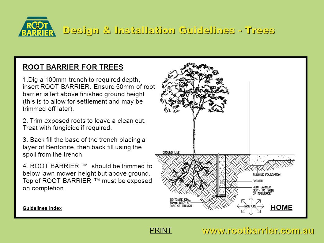 c www.rootbarrier.com.au www.rootbarrier.com.au Design & Installation Guidelines - Trees Guidelines Index HOME ROOT BARRIER FOR TREES 1.Dig a 100mm trench to required depth, insert ROOT BARRIER.