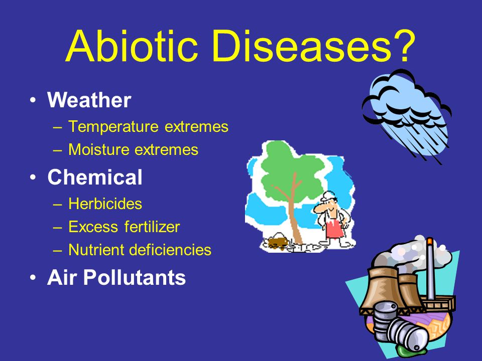 Abiotic Diseases? Weather –Temperature extremes –Moisture extremes Chemical –Herbicides –Excess fertilizer –Nutrient deficiencies Air Pollutants