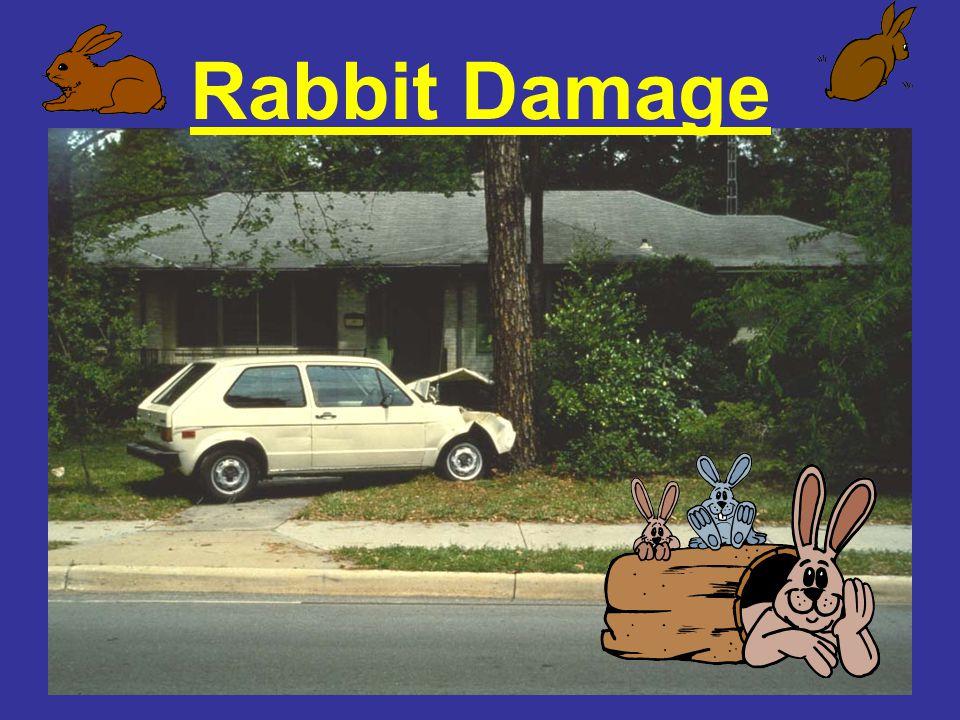 Rabbit Damage