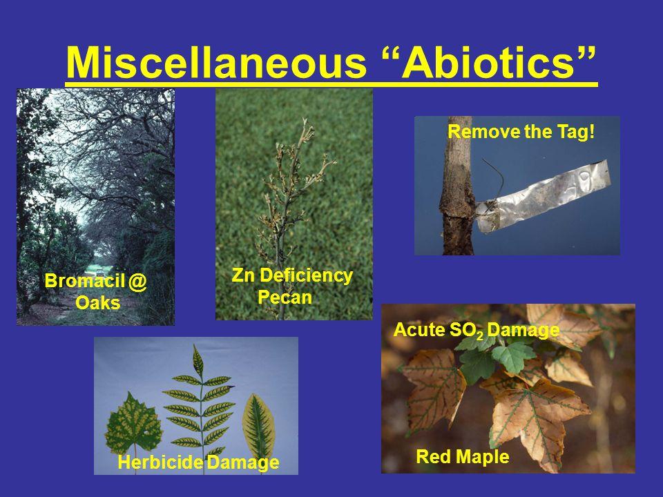 Chemical Burns Borax toxicity @ septic field Chlorine damage: pines and waxmytle Fertilizer burn @ Eucalyptus