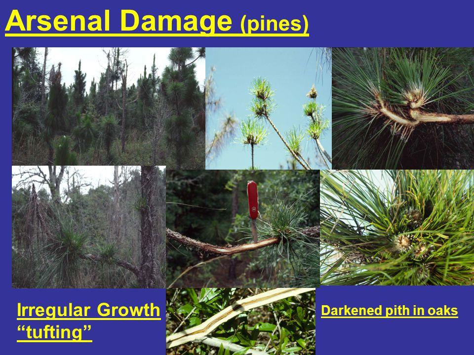 Arsenal Damage (pines) Irregular Growth tufting Darkened pith in oaks