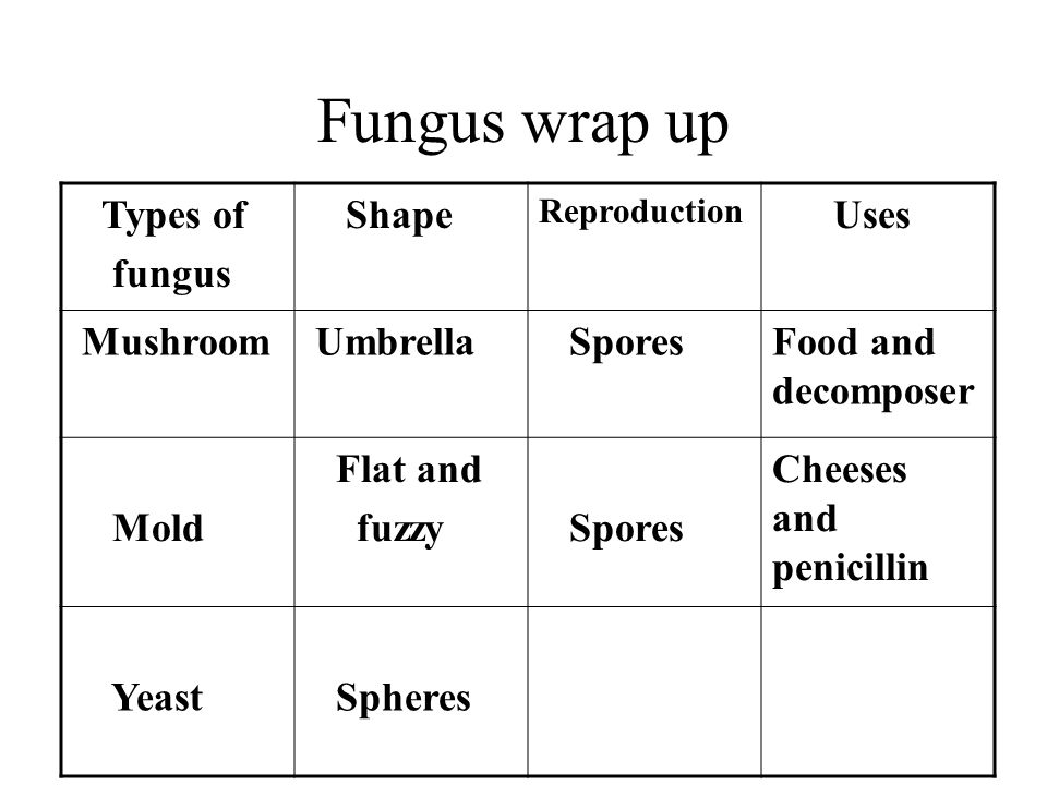 Fungus wrap up Types of fungus Shape Reproduction Uses Mushroom Umbrella SporesFood and decomposer Mold Flat and fuzzy Spores Cheeses and penicillin Yeast Spheres