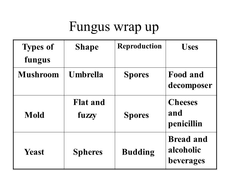Fungus wrap up Types of fungus Shape Reproduction Uses Mushroom Umbrella SporesFood and decomposer Mold Flat and fuzzy Spores Cheeses and penicillin Yeast Spheres Budding Bread and alcoholic beverages