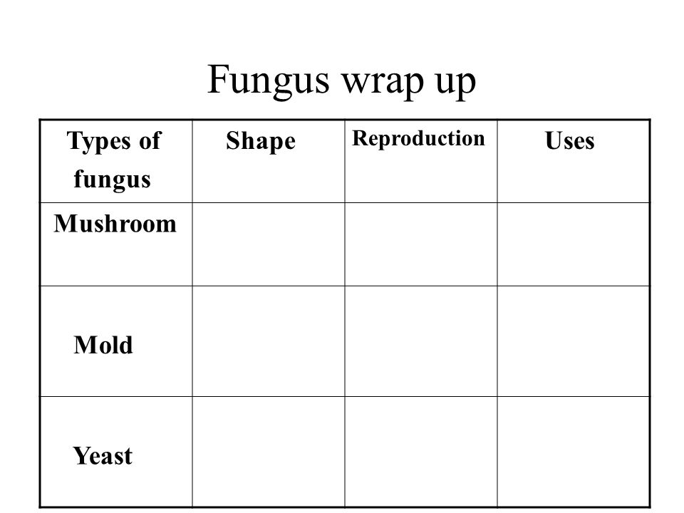 Fungus wrap up Types of fungus Shape Reproduction Uses Mushroom Mold Yeast