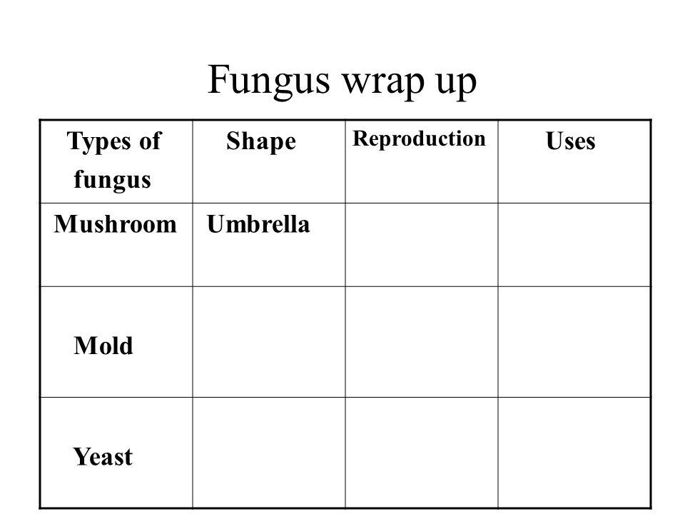 Fungus wrap up Types of fungus Shape Reproduction Uses Mushroom Umbrella Mold Yeast