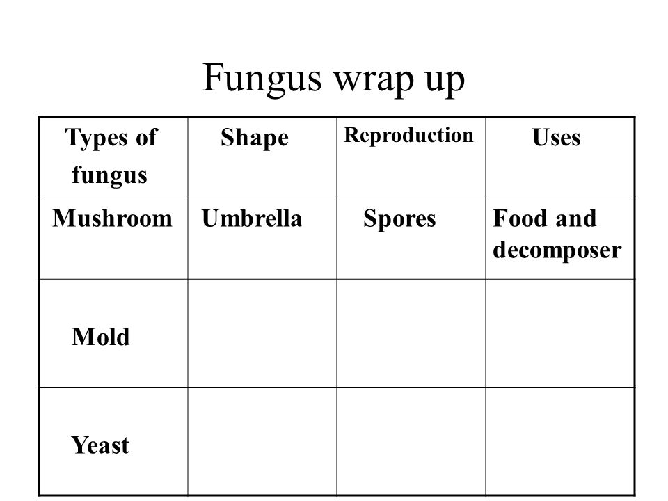 Fungus wrap up Types of fungus Shape Reproduction Uses Mushroom Umbrella SporesFood and decomposer Mold Yeast