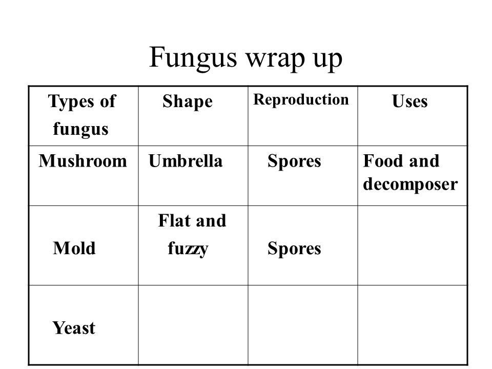 Fungus wrap up Types of fungus Shape Reproduction Uses Mushroom Umbrella SporesFood and decomposer Mold Flat and fuzzy Spores Yeast