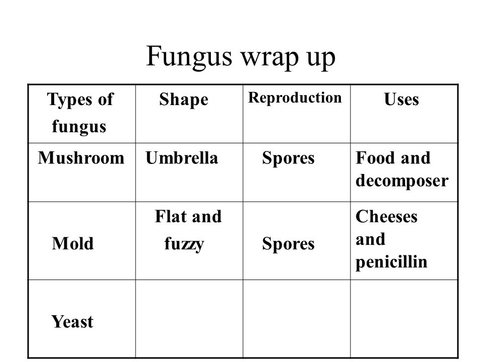 Fungus wrap up Types of fungus Shape Reproduction Uses Mushroom Umbrella SporesFood and decomposer Mold Flat and fuzzy Spores Cheeses and penicillin Yeast
