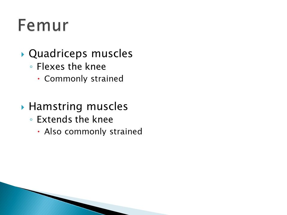  Quadriceps muscles ◦ Flexes the knee  Commonly strained  Hamstring muscles ◦ Extends the knee  Also commonly strained