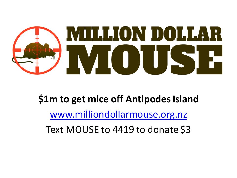 $1m to get mice off Antipodes Island www.milliondollarmouse.org.nz Text MOUSE to 4419 to donate $3
