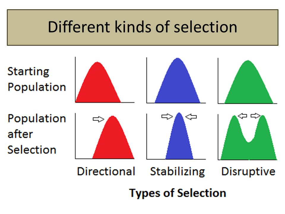 Different kinds of selection