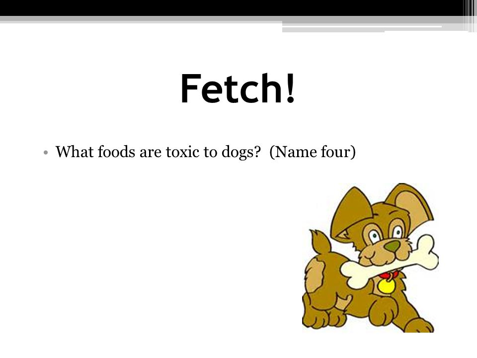 Fetch! What foods are toxic to dogs (Name four)
