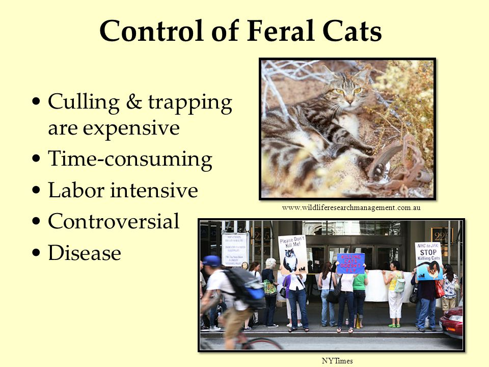Control of Feral Cats Culling & trapping are expensive Time-consuming Labor intensive Controversial Disease NYTimes www.wildliferesearchmanagement.com.au