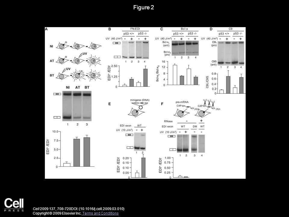 Figure 2 Cell 2009 137, 708-720DOI: (10.1016/j.cell.2009.03.010) Copyright © 2009 Elsevier Inc.