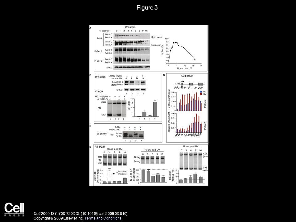 Figure 3 Cell 2009 137, 708-720DOI: (10.1016/j.cell.2009.03.010) Copyright © 2009 Elsevier Inc.