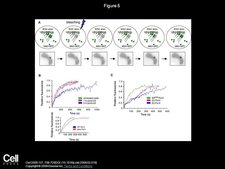Figure 5 Cell 2009 137, 708-720DOI: (10.1016/j.cell.2009.03.010) Copyright © 2009 Elsevier Inc.