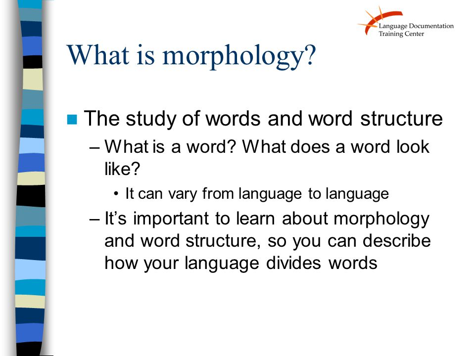 What is morphology. The study of words and word structure –What is a word.