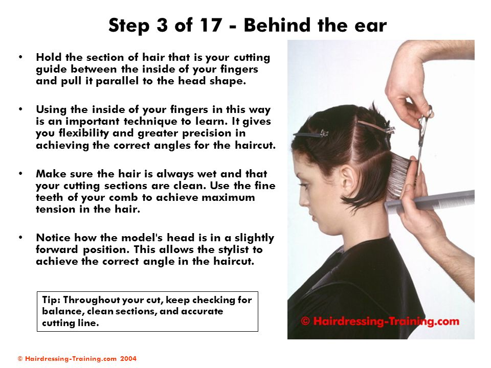 © Hairdressing-Training.com 2004 Step 3 of 17 - Behind the ear Hold the section of hair that is your cutting guide between the inside of your fingers