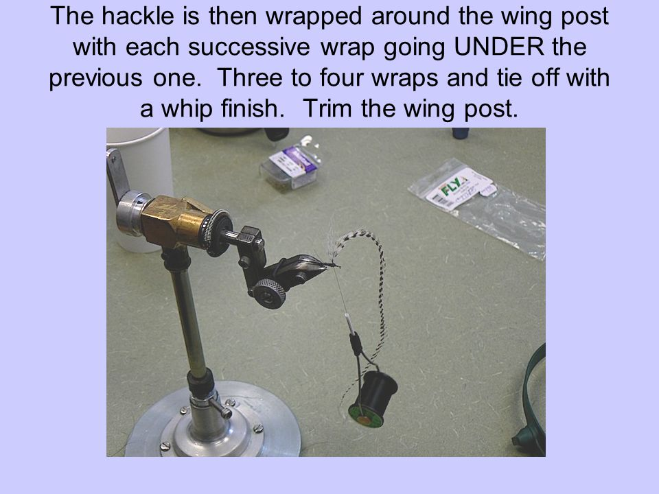The hackle is then wrapped around the wing post with each successive wrap going UNDER the previous one. Three to four wraps and tie off with a whip fi