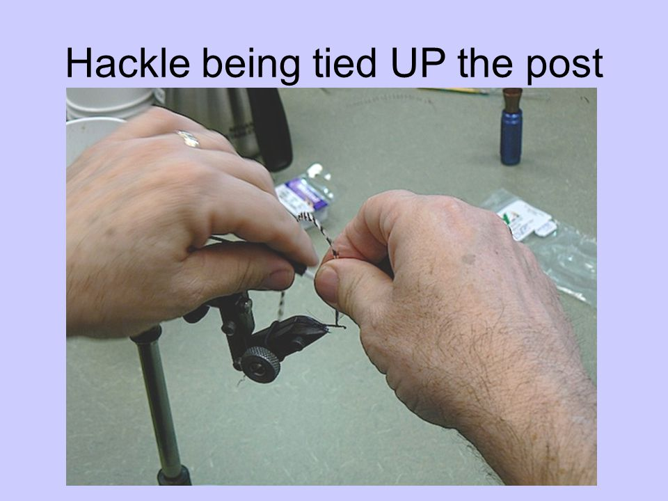 Hackle being tied UP the post