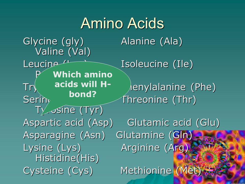 Amino Acids Glycine (gly) Alanine (Ala) Valine (Val) Leucine (Leu) Isoleucine (Ile) Proline (Pro) Tryptophan (Trp) Phenylalanine (Phe) Serine (Ser) Threonine (Thr) Tyrosine (Tyr) Aspartic acid (Asp) Glutamic acid (Glu) Asparagine (Asn) Glutamine (Gln) Lysine (Lys) Arginine (Arg) Histidine(His) Cysteine (Cys) Methionine (Met) Which amino acids will H- bond?