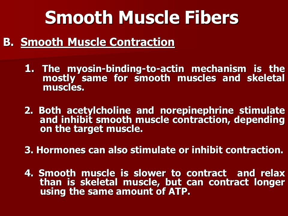 Smooth Muscle Fibers B. Smooth Muscle Contraction 1. The myosin-binding-to-actin mechanism is the mostly same for smooth muscles and skeletal muscles.