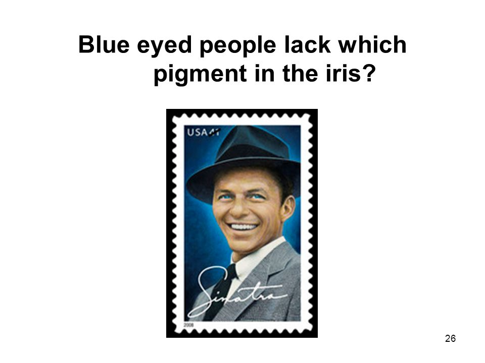 26 Blue eyed people lack which pigment in the iris