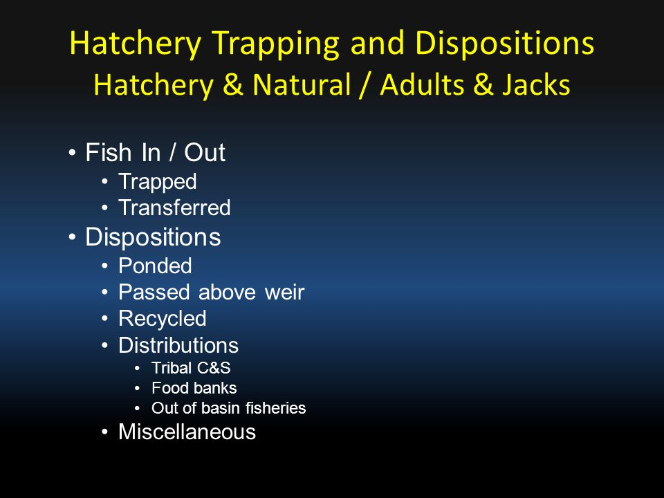 Hatchery & Natural / Adults & Jacks Fish In / Out Trapped Transferred Dispositions Ponded Passed above weir Recycled Distributions Tribal C&S Food ban