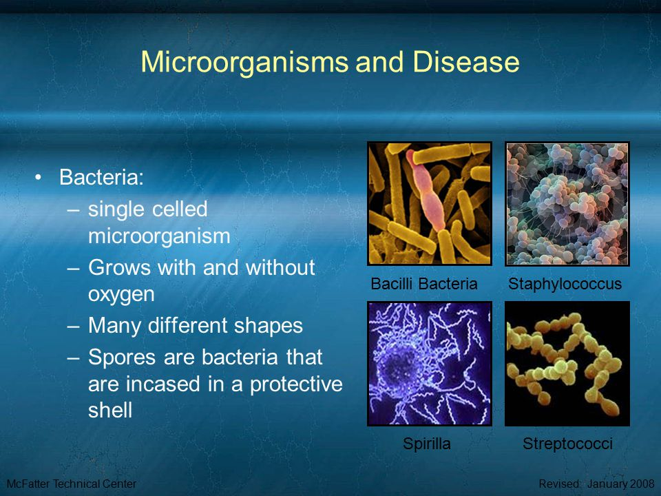 McFatter Technical CenterRevised: January 2008 Microorganisms and Disease Bacteria: –single celled microorganism –Grows with and without oxygen –Many different shapes –Spores are bacteria that are incased in a protective shell Staphylococcus Bacilli Bacteria StreptococciSpirilla