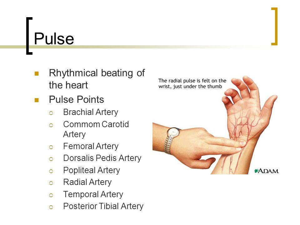 Pulse Rhythmical beating of the heart Pulse Points  Brachial Artery  Commom Carotid Artery  Femoral Artery  Dorsalis Pedis Artery  Popliteal Arte