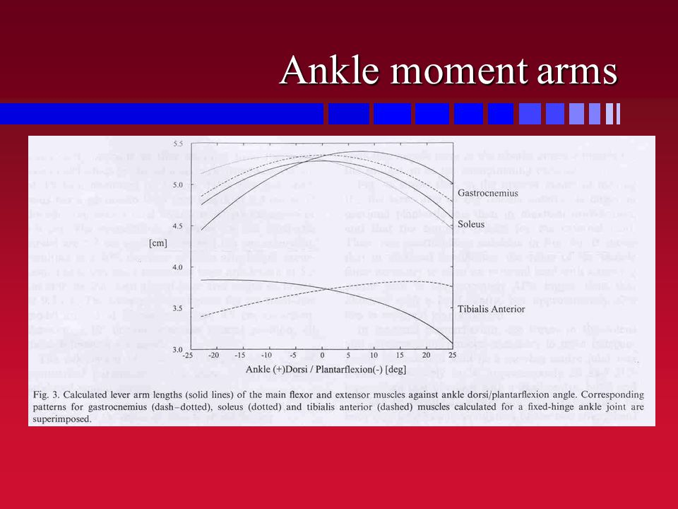 Ankle moment arms