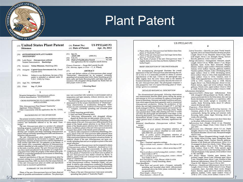 Plant Patent 5/3/20158