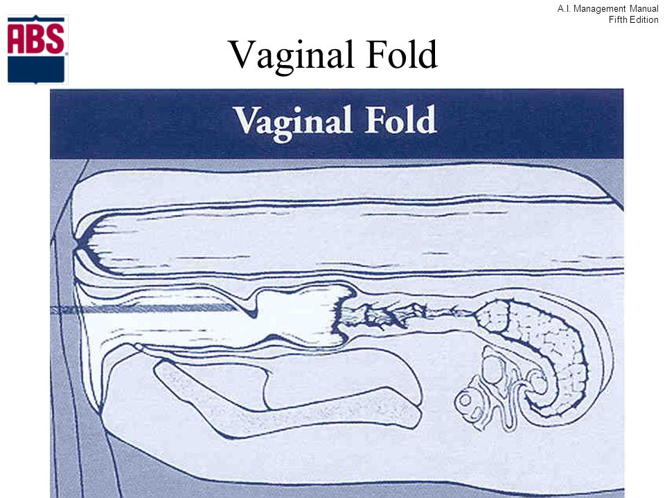 A.I. Management Manual Fifth Edition Vaginal Fold