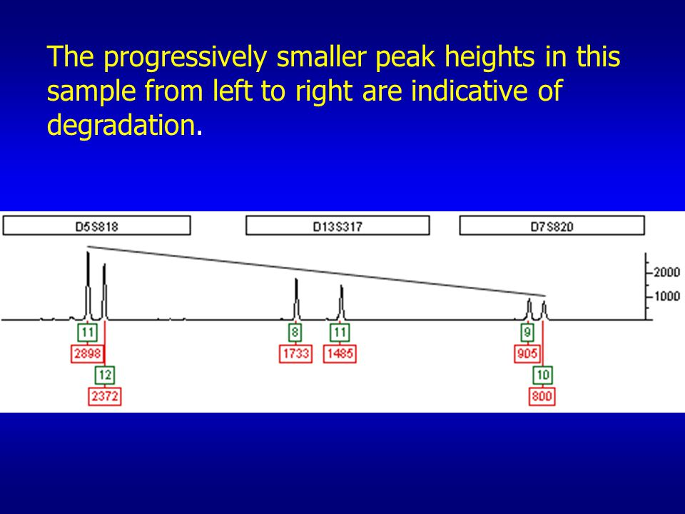 The progressively smaller peak heights in this sample from left to right are indicative of degradation.
