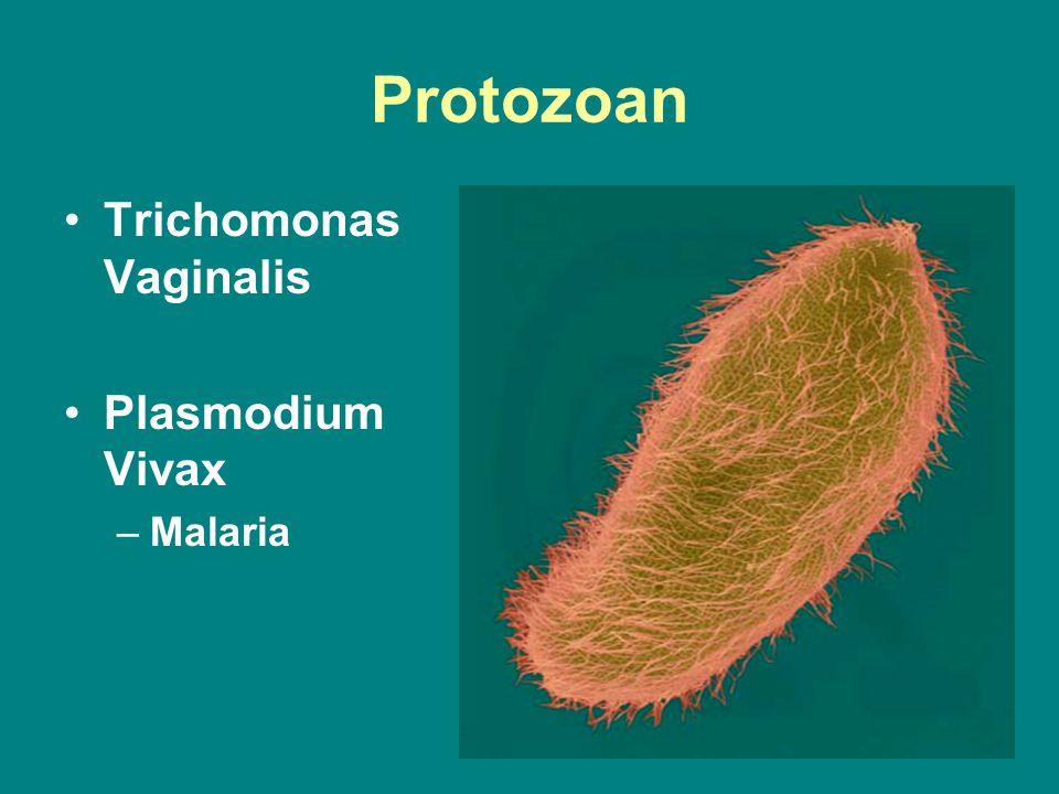Protozoan Trichomonas Vaginalis Plasmodium Vivax –Malaria