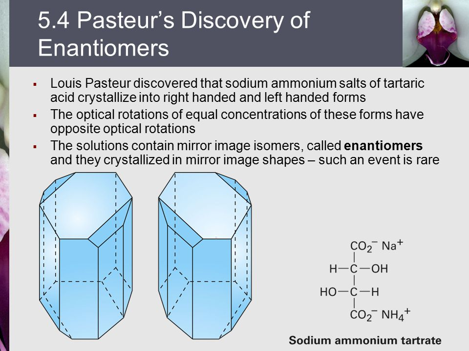  Louis Pasteur discovered that sodium ammonium salts of tartaric acid crystallize into right handed and left handed forms  The optical rotations of equal concentrations of these forms have opposite optical rotations  The solutions contain mirror image isomers, called enantiomers and they crystallized in mirror image shapes – such an event is rare 5.4 Pasteur's Discovery of Enantiomers