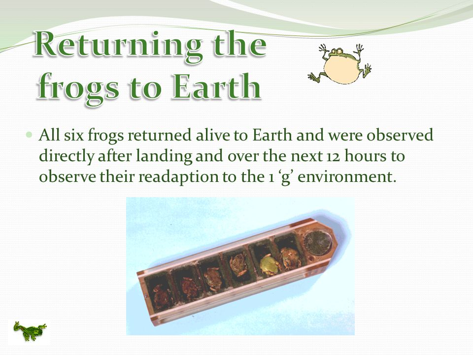 All six frogs returned alive to Earth and were observed directly after landing and over the next 12 hours to observe their readaption to the 1 'g' environment.