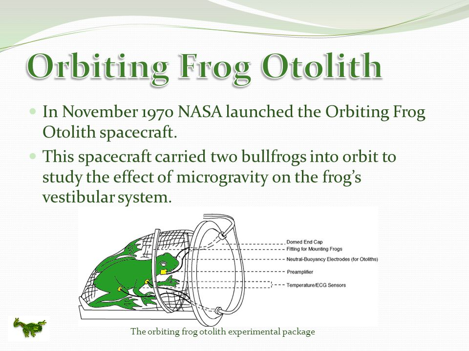 In November 1970 NASA launched the Orbiting Frog Otolith spacecraft.
